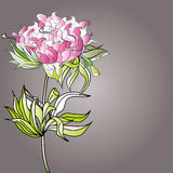 Paeonia flowers. Universal template for greeting card, web page, background Royalty Free Stock Photo