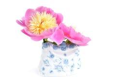 Paeonia lactiflora 'Bowl von Beauty' Lizenzfreies Stockfoto