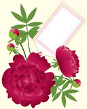 Paeony greeting card Stock Images