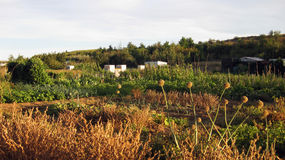 Paesaggi agricoli Immagini Stock