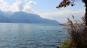 Paesaggi del lago Genave con erba immagine stock libera da diritti