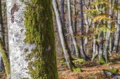 paesaggi del Paese Basco Immagine Stock