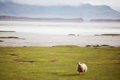 Paesaggi dell'Islanda Immagine Stock