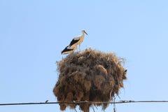 Paesaggi della cicogna della Turchia Fotografia Stock