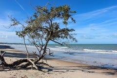 Paesaggi della città della spiaggia di Prado, Bahia, Brasile Immagini Stock