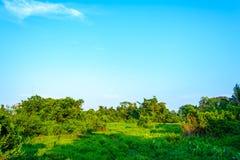 Paesaggi della foresta Immagini Stock
