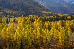 Paesaggi delle montagne in autunno, Repubblica di Altai Fotografie Stock