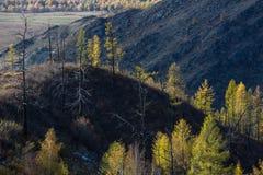 Paesaggi delle montagne della Repubblica di Altai all'autunno Immagini Stock Libere da Diritti