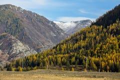 Paesaggi delle montagne della Repubblica di Altai all'autunno Fotografia Stock