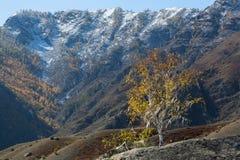 Paesaggi delle montagne di Altai, Repubblica di Altai, Russia Corsa Fotografie Stock Libere da Diritti