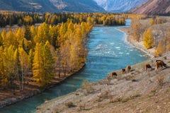Paesaggi delle montagne, Repubblica di Altai, Russia Corsa Fotografie Stock