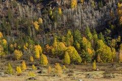 Paesaggi di Altay Mountains in autunno, Repubblica di Altai Fotografie Stock Libere da Diritti