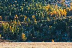 Paesaggi di Altay Mountains in autunno, Repubblica di Altai Fotografia Stock Libera da Diritti