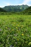 Paesaggi di Kamchatkian Fotografie Stock Libere da Diritti