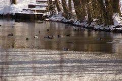 Paesaggi invernali - anatre e la Francia acqua ghiacciata Fotografie Stock