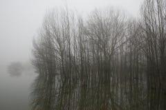 Paesaggi nebbiosi Fotografia Stock