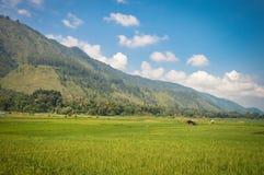 Paesaggi panoramici con le piantagioni del riso nell'isola di Samosir, lago Toba, la Sumatra Settentrionale l'indonesia fotografia stock