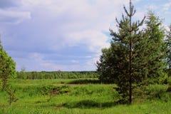 Paesaggi rurali Fotografia Stock