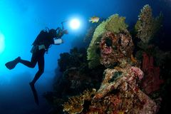 Paesaggi subacquei? Fotografia Stock