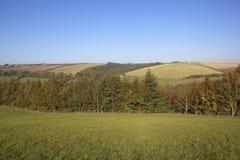 Paesaggio 2 di autunno Fotografia Stock