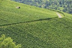 Paesaggio #2, Stuttgart della vigna Fotografia Stock