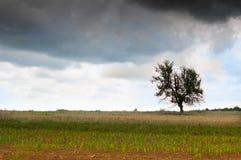 paesaggio fotografia stock libera da diritti