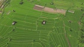 Paesaggio aereo del giacimento del risone Piantagione crescente del riso di vista del fuco in Sapa, Vietnam Industria del grano e video d archivio