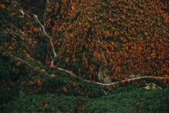 Paesaggio aereo della Germania di Autumn Forest fotografia stock libera da diritti