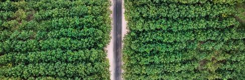 Paesaggio aereo, la strada con le foreste Fotografia Stock
