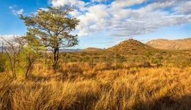 Paesaggio africano Fotografia Stock