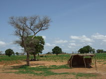 Paesaggio africano Fotografia Stock Libera da Diritti