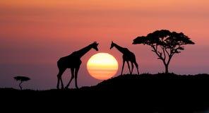 Paesaggio africano illustrazione vettoriale