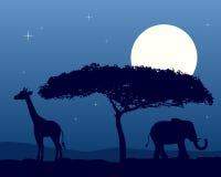 Paesaggio africano alla notte Immagini Stock Libere da Diritti