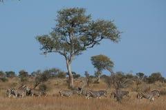 Paesaggio africano con gli animali Immagini Stock