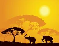 Paesaggio africano con gli elefanti Fotografie Stock