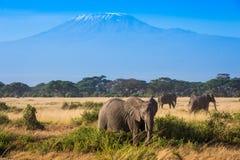 Paesaggio africano con gli elefanti e la montagna di Kilimanjaro Fotografia Stock