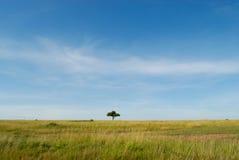 Paesaggio africano con l'albero, masai Mara, Kenya Immagine Stock
