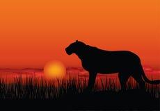 Paesaggio africano con la siluetta animale Backgro di tramonto della savanna Fotografia Stock