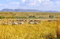 Paesaggio africano della regione selvaggia immagine stock