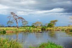 Paesaggio africano, Serengeti, Tanzania Fotografia Stock Libera da Diritti