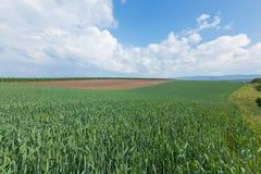 Paesaggio agricolo Immagine Stock Libera da Diritti