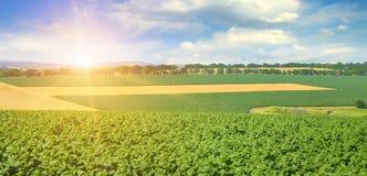 Paesaggio agricolo Ampia foto fotografia stock