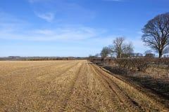 Paesaggio agricolo con gli alberi e le siepi di arbusti nell'inverno Fotografia Stock Libera da Diritti