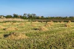 Paesaggio agricolo con i mucchi di fieno di fieno Immagine Stock
