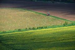 Paesaggio agricolo con il trattore in Moravia del sud al tramonto, Fotografie Stock