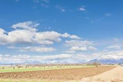 Paesaggio agricolo Con l'aratro del trattore un campo Fotografie Stock Libere da Diritti