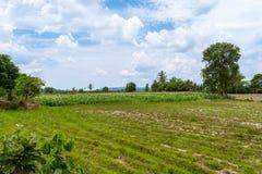 Paesaggio agricolo del campo di grano Fotografia Stock Libera da Diritti