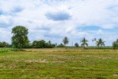 Paesaggio agricolo del campo di grano Immagini Stock