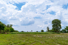 Paesaggio agricolo del campo di grano Fotografie Stock Libere da Diritti