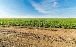 Paesaggio agricolo del giacimento della soia verde Fotografia Stock Libera da Diritti